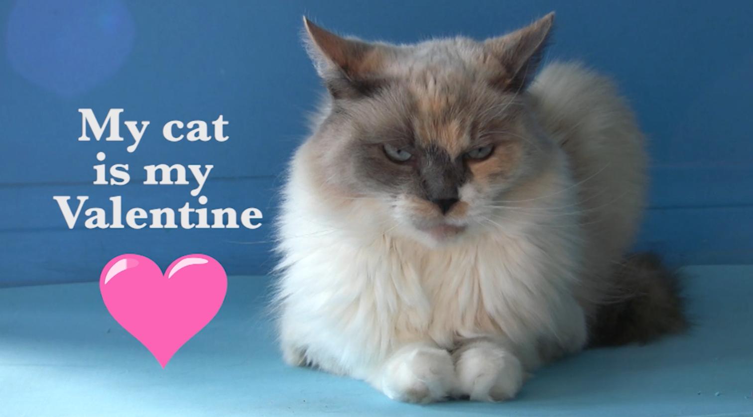 My Cat Is My Valentinef
