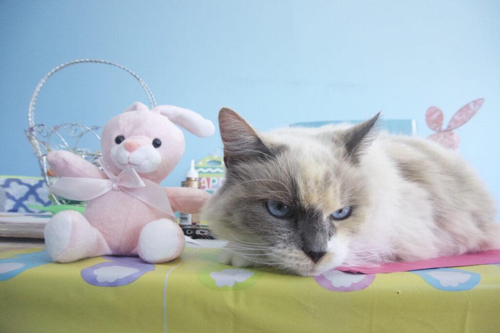 Fairy Princess with Bunny