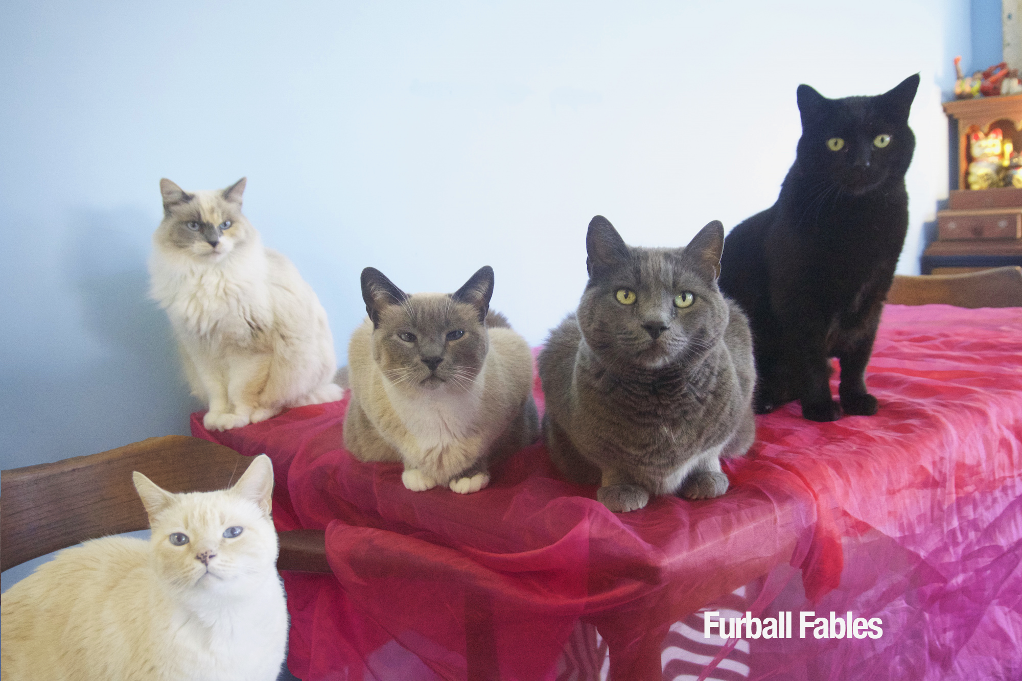 The Furball fables Cats