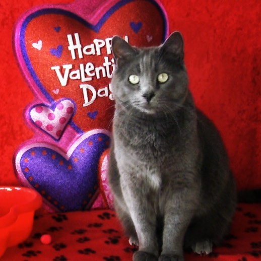 cat-valentine-catlove furball Fables