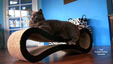 Yogi on the Petfusion Lounger
