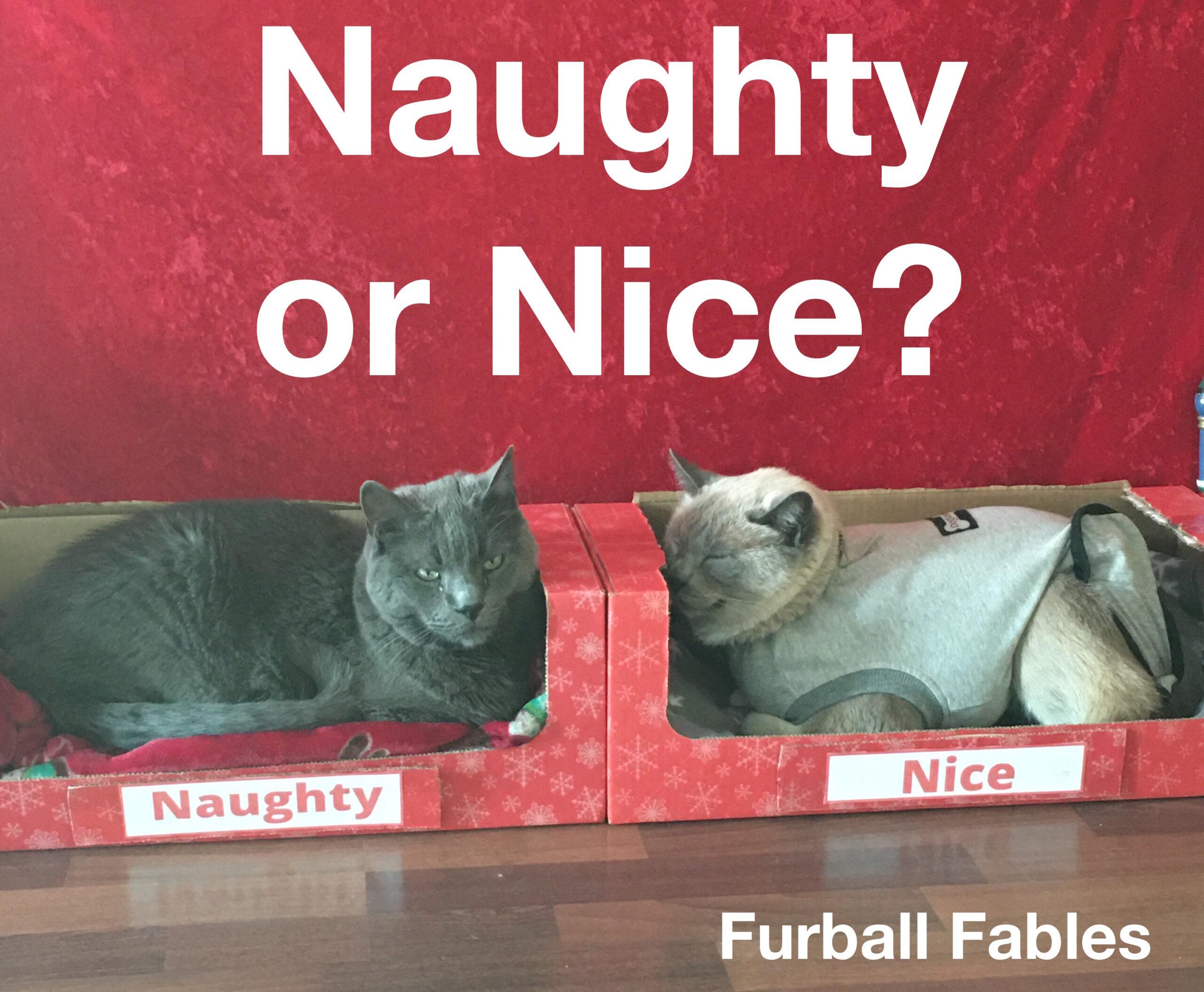 Naughty Nice Cat Challenge