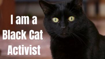 I am a Black Cat Activist Furball Fables