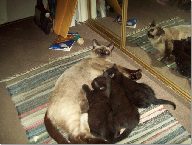 three lucky black kittens